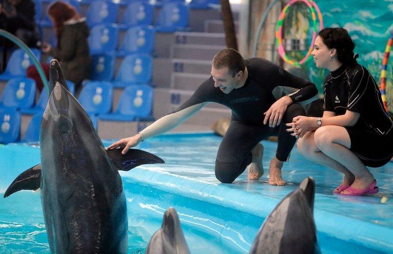 Дельфинотерапия для участников АТО в киевском дельфинарии.