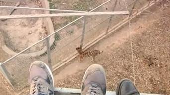 Креативный суицид. Прыжок в вольер тигра в зоопарке Китая. Видео