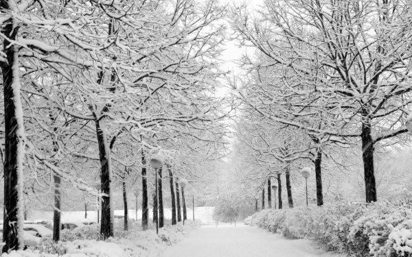 Зима в Чернигове