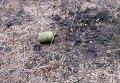 Редчайший случай - мина ОЗМ-72 выпрыгнула, но не взорвалась
