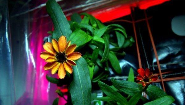 Цветок в космое