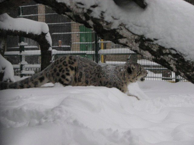Как животные Николаевского зоопарка встретили снегопад