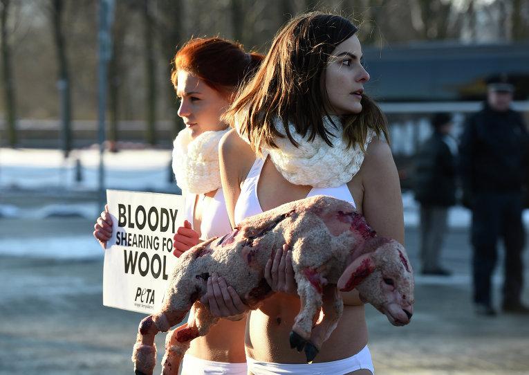 Акция PETA в защиту животных