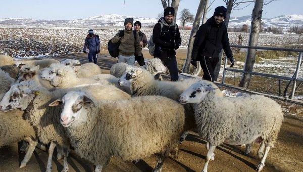 Мигранты в сербской деревне после пересечения границы из Македонии