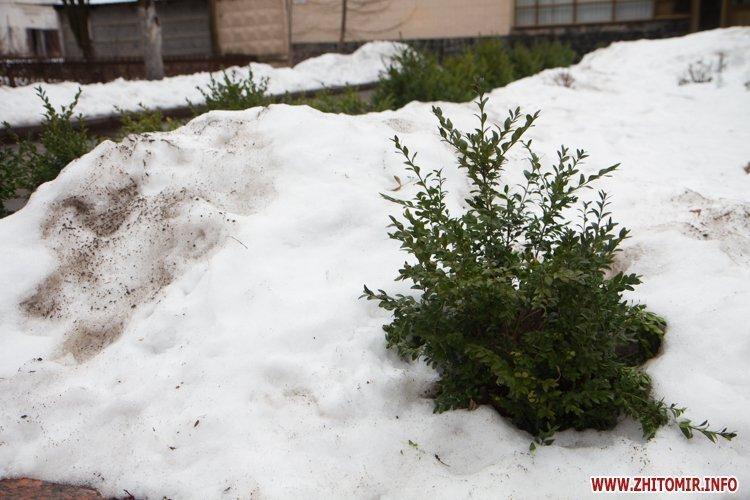 Последствия потепления в Житомире