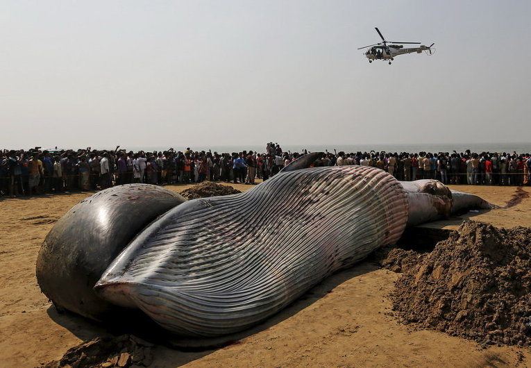 Мертвый кит на пляже Аравийского моря в Мумбаи