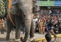 Агрессивный слон на улице города Силигури в индийском штате Западная Бенгалия