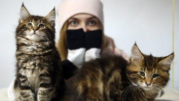 Выставка кошек. Архивное фото