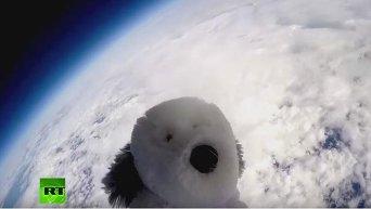 Британские школьники запустили плюшевого щенка в космос на воздушном шаре