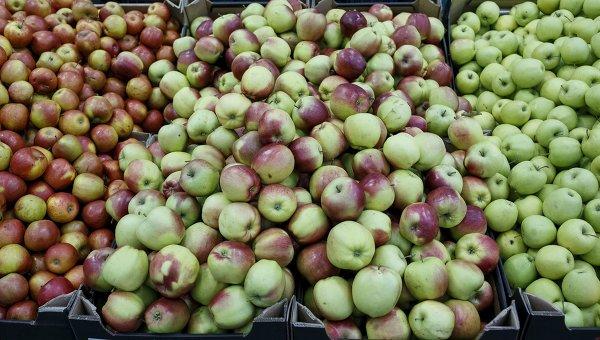 Фрукты. Яблоки