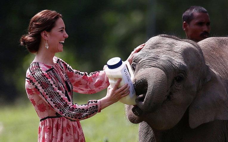 Герцогиня Кембриджская кормит слоненка в Центре реабилитации диких животных и охраны природы в Индии