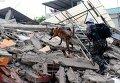 Спасатели  с помощью обученной собаки ищут пострадавших от масштабного землетрясения в Эквадоре.