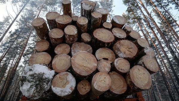 Заготовка леса. Архивное фото