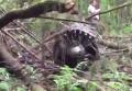 Опубликовано видео с места крушения истребителя в РФ. Видео