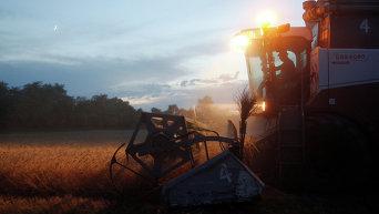 Уборка урожая. Архивное фото
