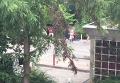 Стрельба в Мюнхене: жители в панике покидают место ЧП. Видео
