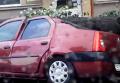 Ураган в Ужгороде: поваленные деревья и поврежденные авто. Видео