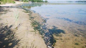 Массовый мор рыбы в Днепропетровской области