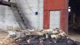 На территории завода во Львовской области обнаружили скотомогильник