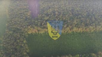 Массовая вырубка лесов в Винницкой области