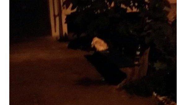 Среди улицы вПавлограде мужчина убил сына— Никто незаступился