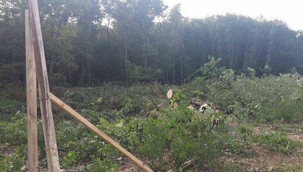 Скандальная вырубка леса