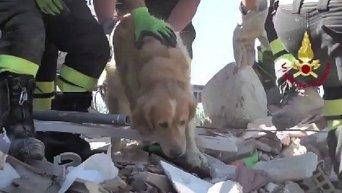 Спасатели спустя девять дней спасли из-под завалов собаку породы. Видео