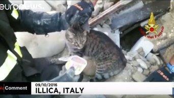 Спасение кота из-под завалов разрушенного землетрясением здания