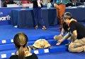 Гонка черепахи и зайца в Таиланде. Видео