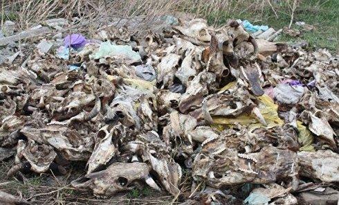 Просроченные продукты питания и останки животных на свалке под Николаевом