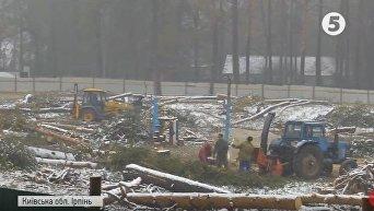 Активисты: в Ирпене вырубают лес под застройку