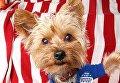 Собаки, которые ходили на выборы президента США