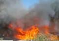 Израиль захлестнула волна пожаров. Хайфа - горячая точка четверга. Видео