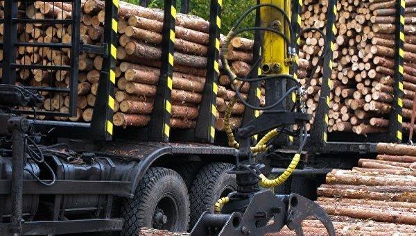 Вырубка леса в Украине. Архивное фото