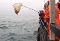 Поиск обломков Ту-154 в Черном море на кораблях и вертолетах. Видео