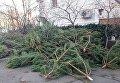 В Одессе продавцы елок бросили нераспроданный товар прямо на улицах