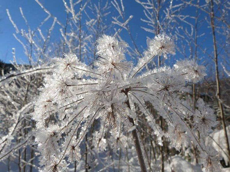 Заснеженные Карпаты в первые дни нового года