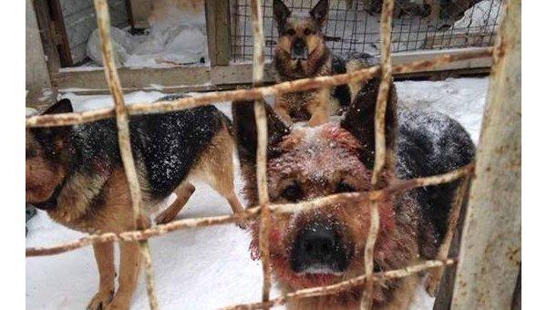 ВКиевской области собаки загрызли участника АТО