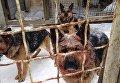 Под Киевом собаки напали на прохожего