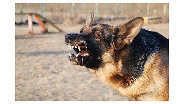 Какое наказание выдумали народные избранники — Издевательство над животными