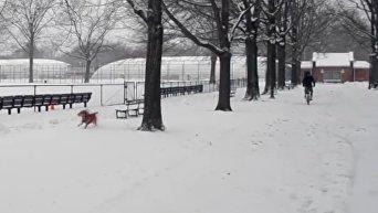 Последствия снежного шторма в Нью-Йорке. Видео
