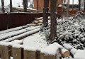 Вырубка деревьев в Ирпене