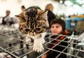 Выставка котов в Киеве