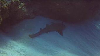 Акула с ножом в голове попросила о помощи дайвера. Видео