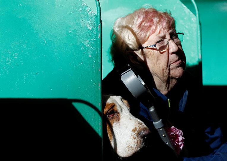 В Британии открылась самая масштабная выставка собак в мире