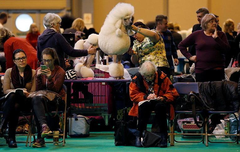 Выставка собак в Бирмингеме, Великобритания