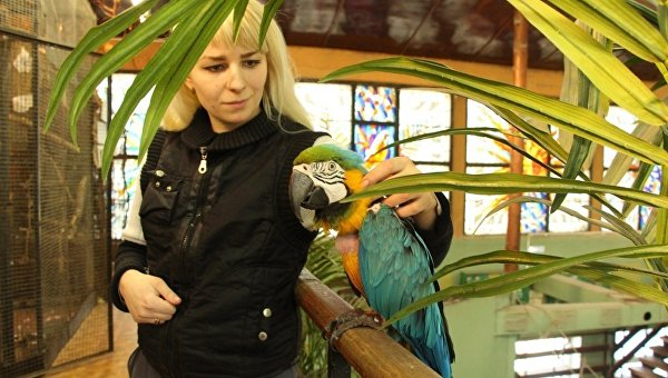 Попугай ара по кличке Моника