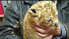 Одесские пограничники обнаружили львенка