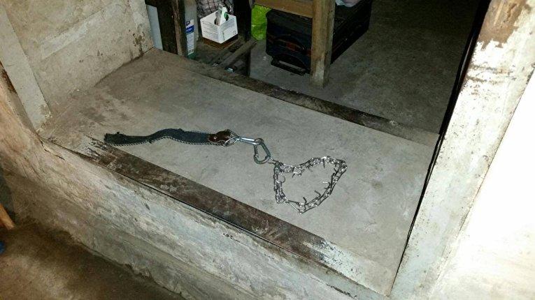 СБУ освободила неменее 200 пленных наркоманов