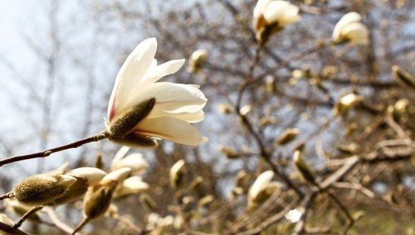 Солнечная погода. Весна. Архивное фото